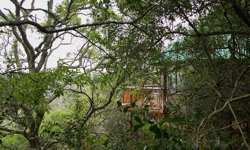 Forest Elders Treetop Suite Garden Route Accommodation
